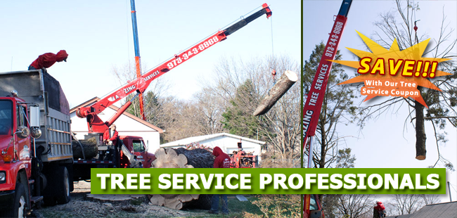 Tree Removal Coupons Bergen County, NJ - banner