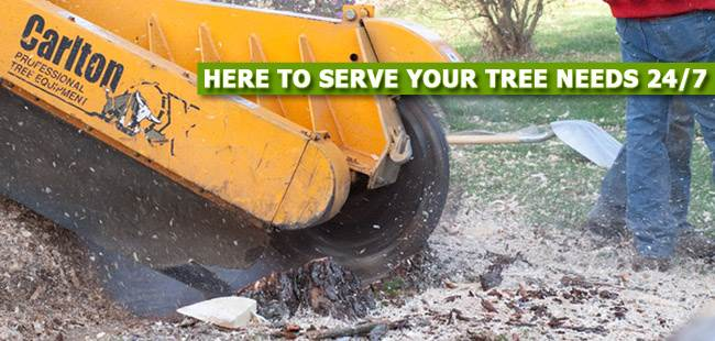 Stump Grinding in Morris County, NJ - image