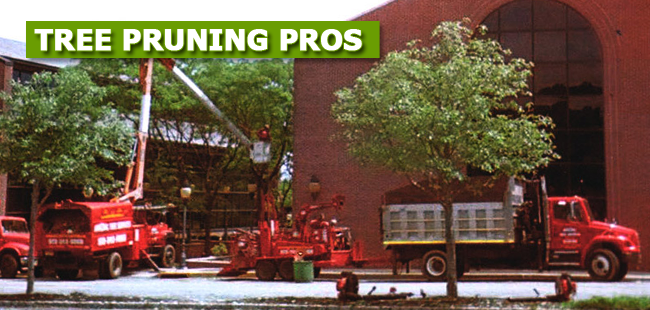 Tree Pruning Professionals NJ - image