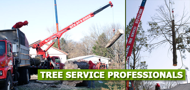 Tulip Tree Removal in NJ - image