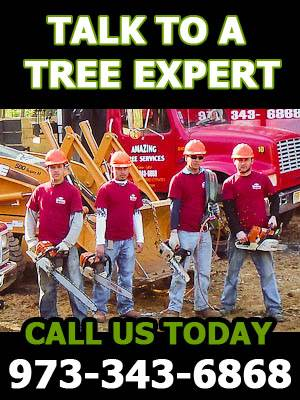 Free Tree Service Estimate in NJ