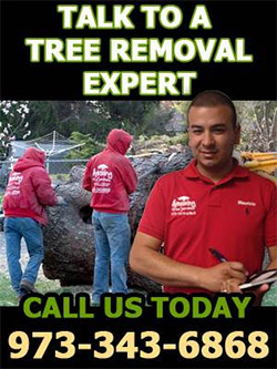 Tree Removal Expert