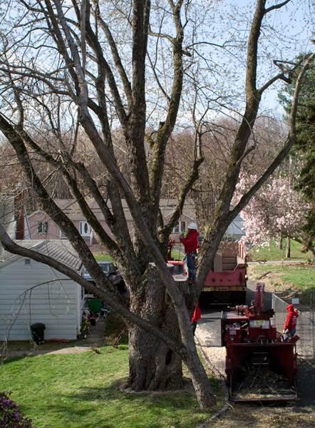 Tree Service Morris County