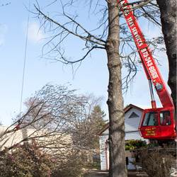 NJ Tree Services Gallery - Image 2