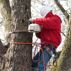 NJ Tree Services Gallery - Gallery 3