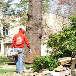 NJ Tree Services Gallery - Images 1