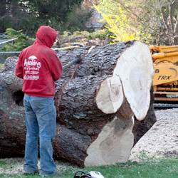 NJ Tree Services Gallery - Images 2
