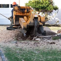 NJ Tree Services Gallery - Images 4