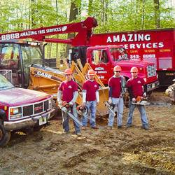 NJ Tree Services Gallery - Images 8
