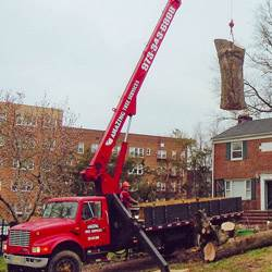 NJ Tree Services Gallery - Images 9