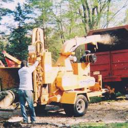 NJ Tree Services Gallery - Img 4