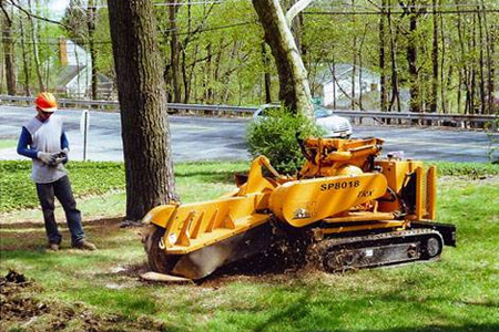 Stump Grinding in NJ - Image 4