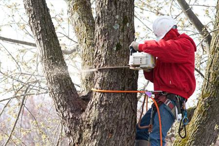 Tree Pruning in NJ - Image 3