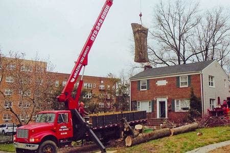 Tree Removal in NJ - Image
