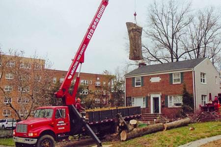 Tree Removal Service In Nj