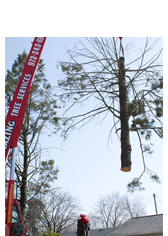 Tree Services in NJ - Image